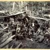 Sawmill Near Kinloch