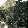 FGR 123, Balloon Peak, Te Anau Milford Track